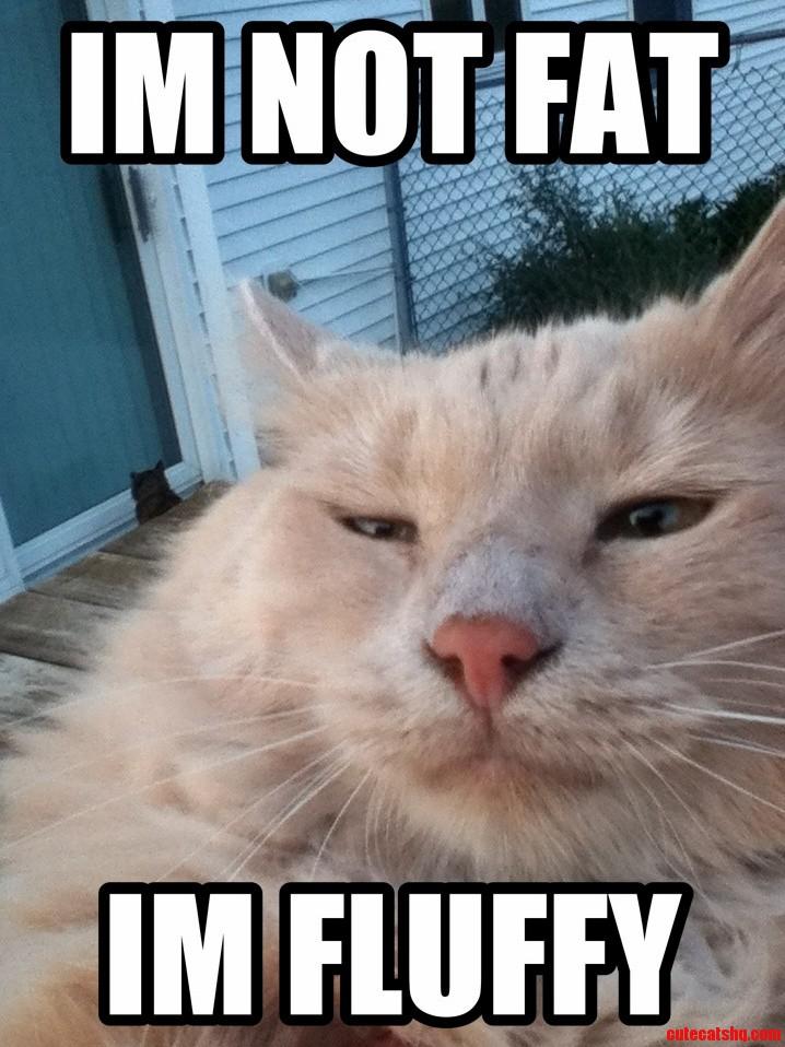 Weetoe Kitty In Pet Voice