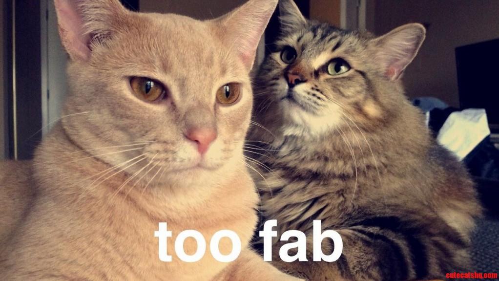 petmate kitty cat condo