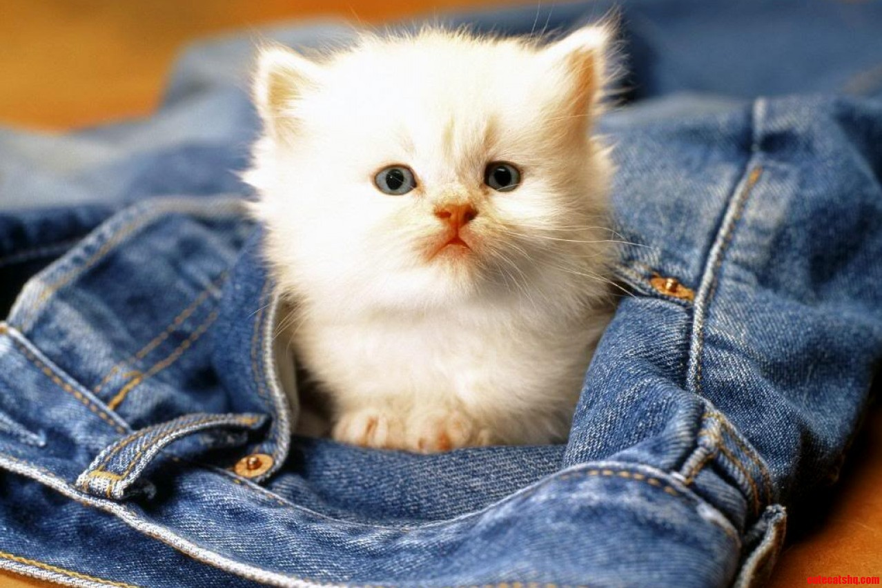 A very beautiful google image she is so cute cute cats hq a very beautiful google image she is so cute voltagebd Gallery