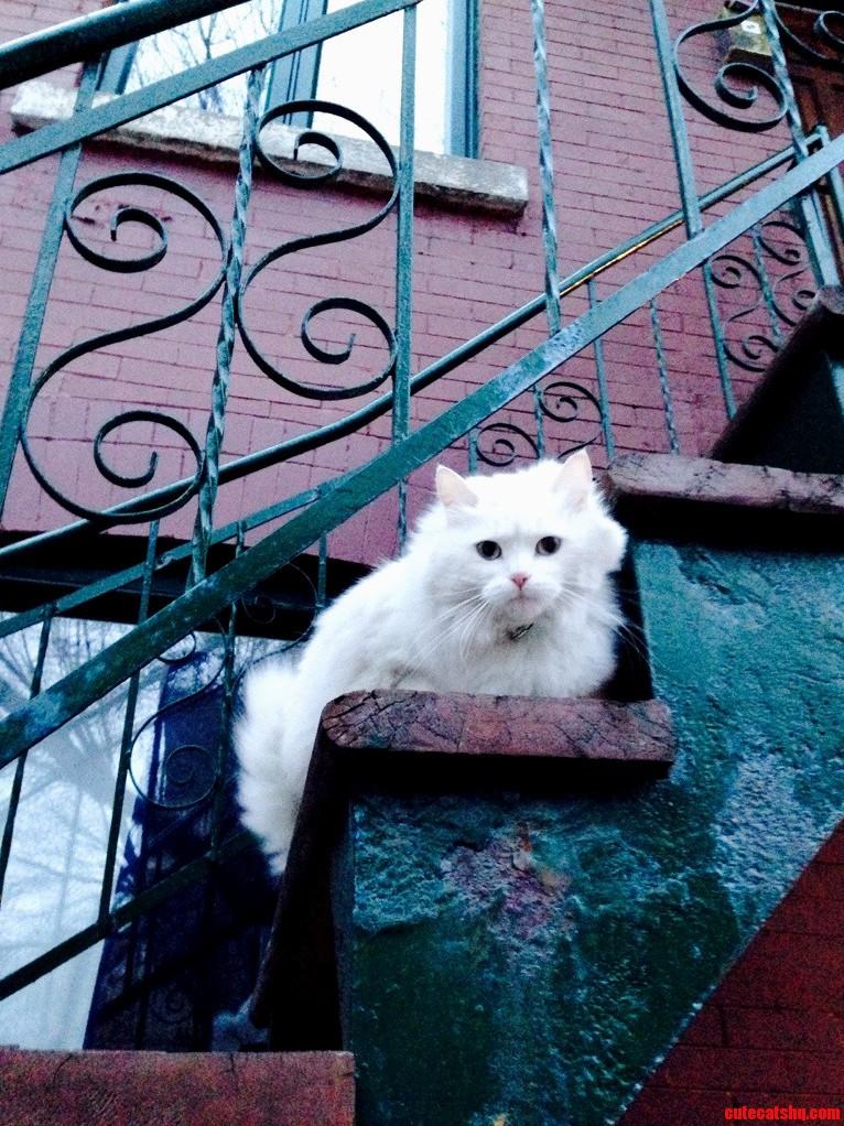 Adorable Neighbor