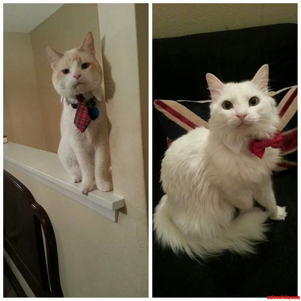 Albert And Gabriel All Dressed Up