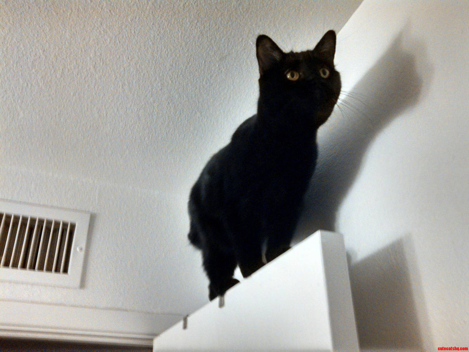 Black Cat Friday Again Heres The Darkness