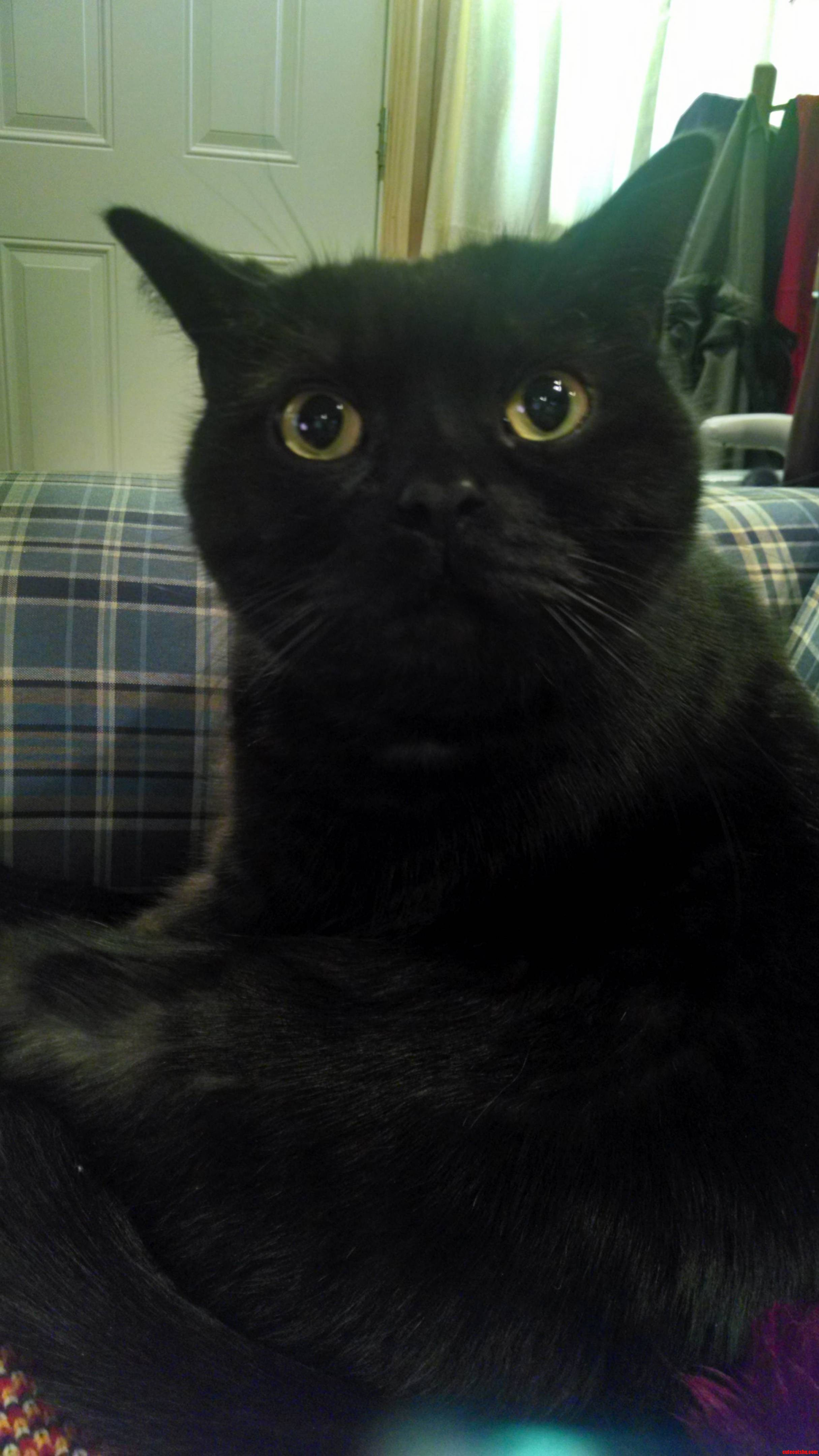 Black Cat Friday This Is My Boy Wolly
