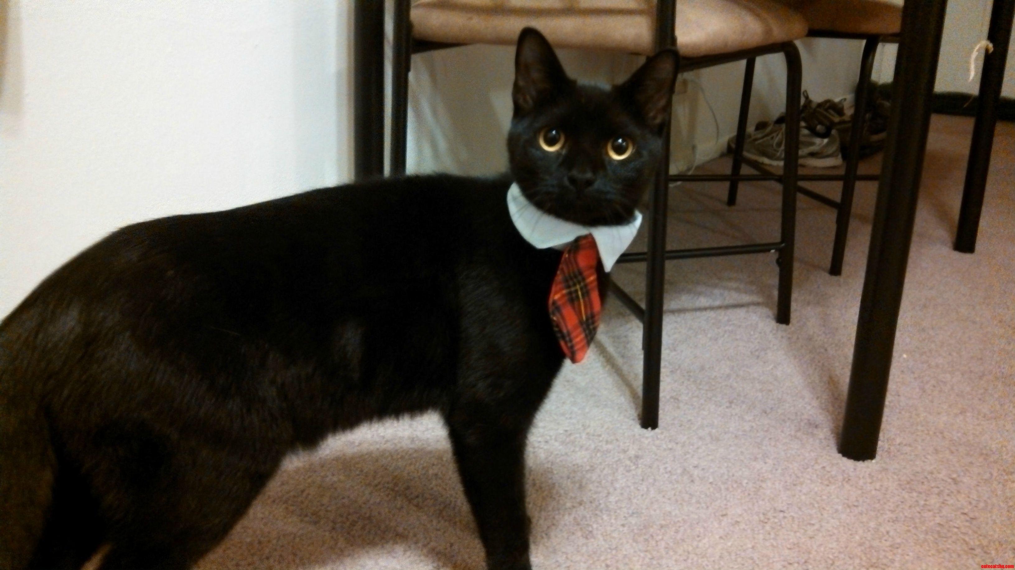Business Cat Costume