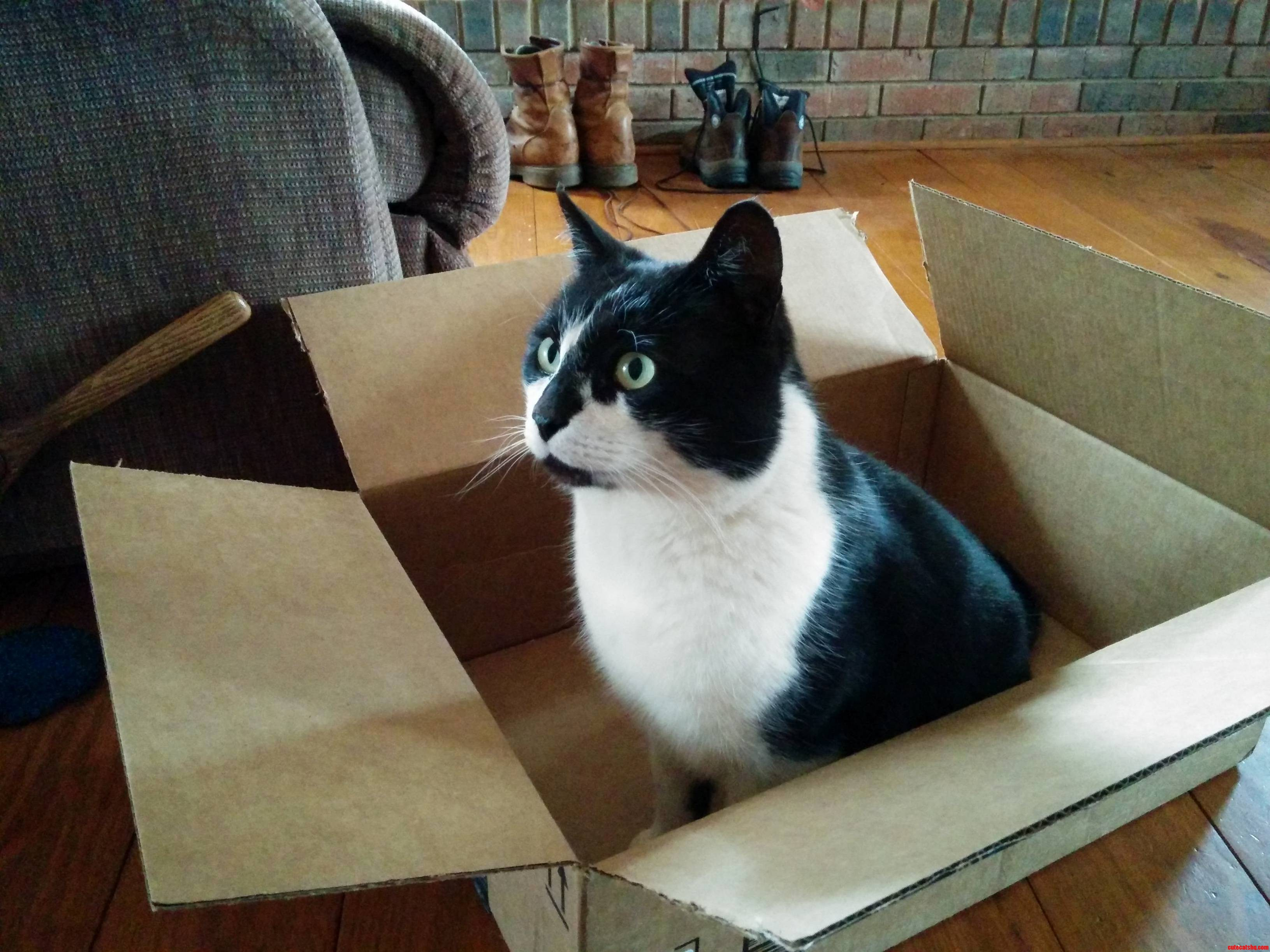 Byron And His Other Box.