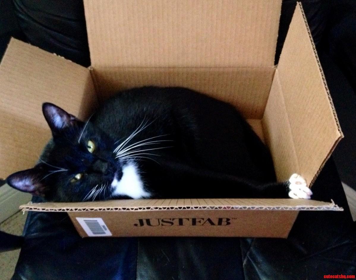 Cardboard Box Aka Cat Magnet
