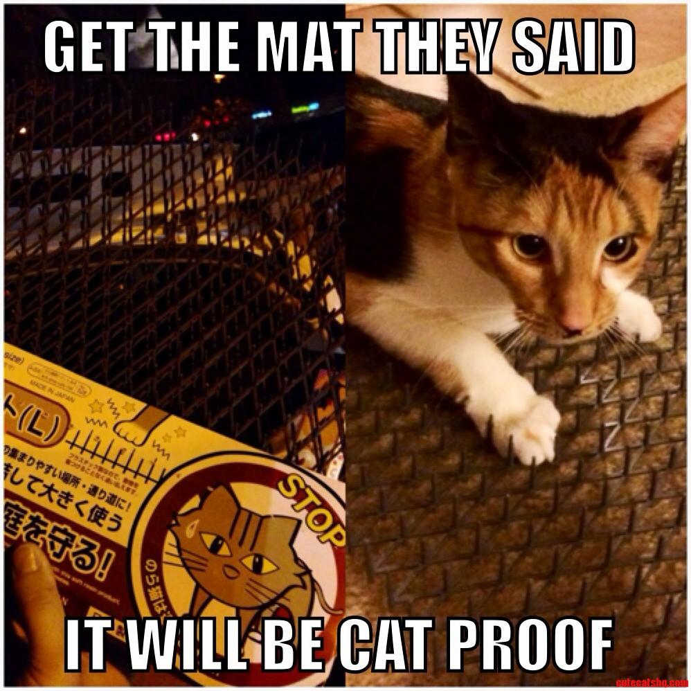 Cat Proof