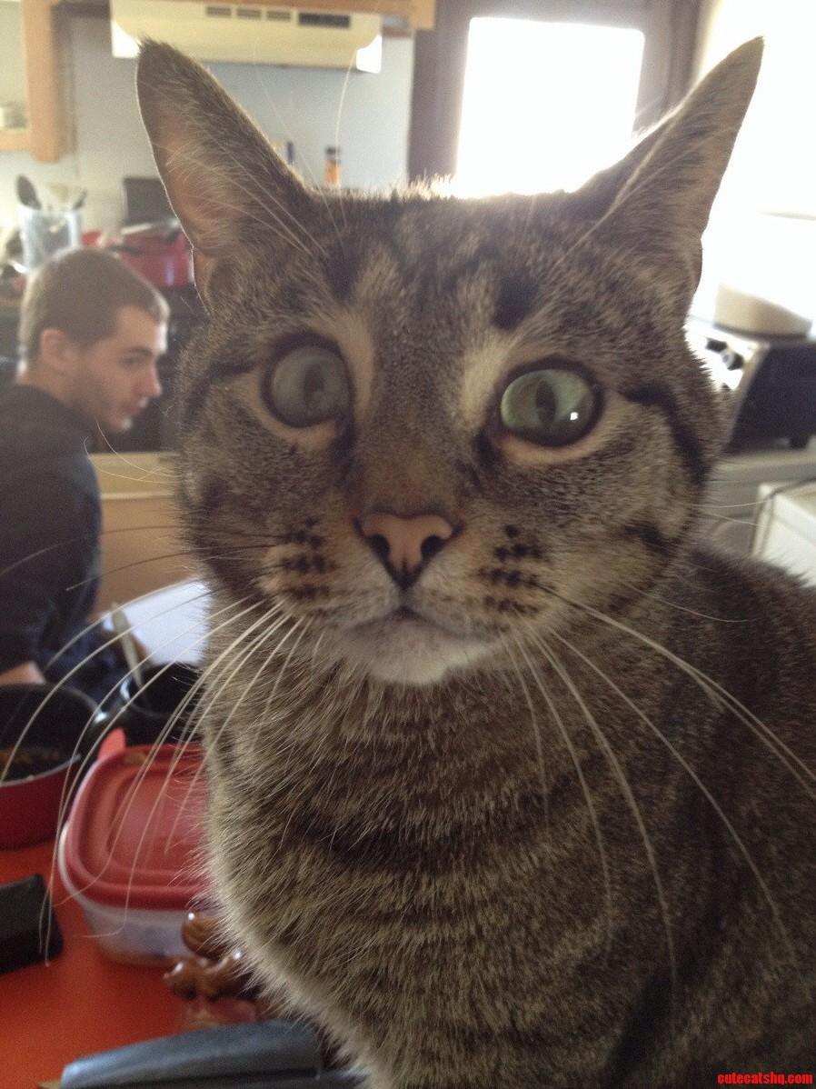 Celery Has Huge Eyes. He Just Looks Perpetually Terrified.