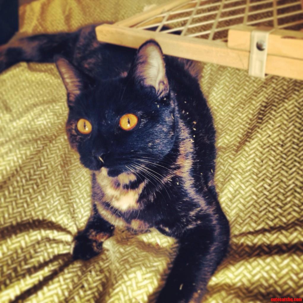 Chloe Covered In Catnip