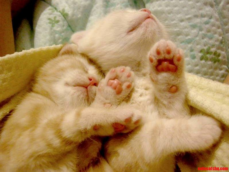 Copy Cat Copying Mom