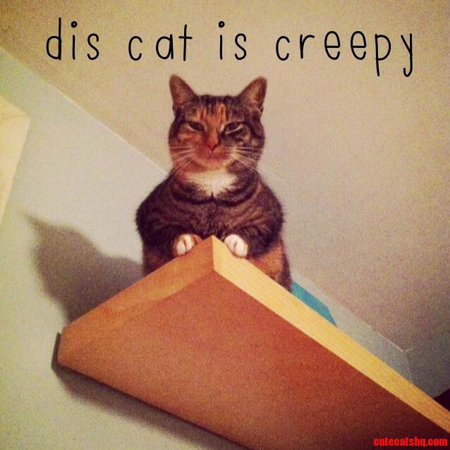 Creepy Cat