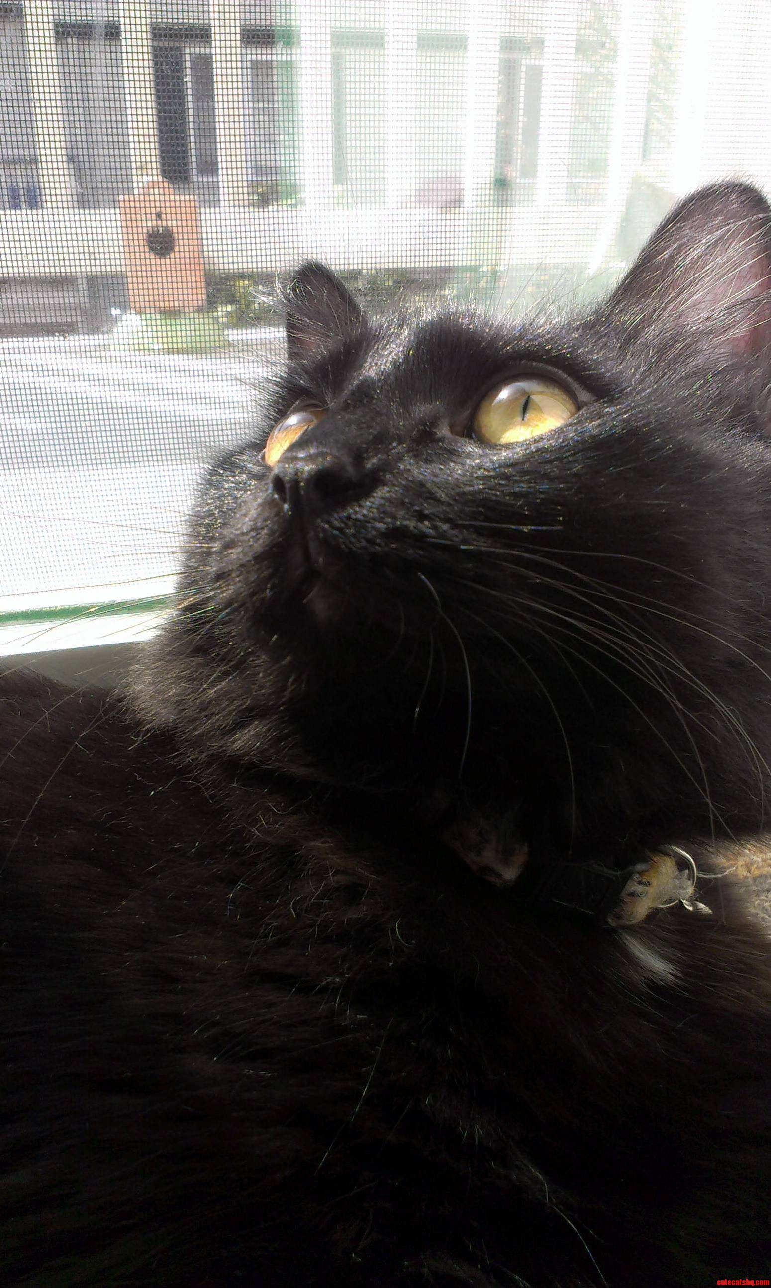 Did I Hear Someone Say Black Cat Friday This Should Be A Thing