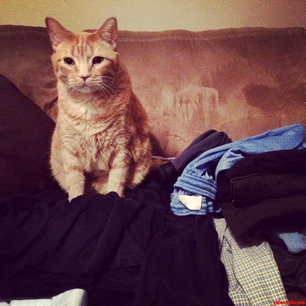 Every Damn Time I Do Laundry.