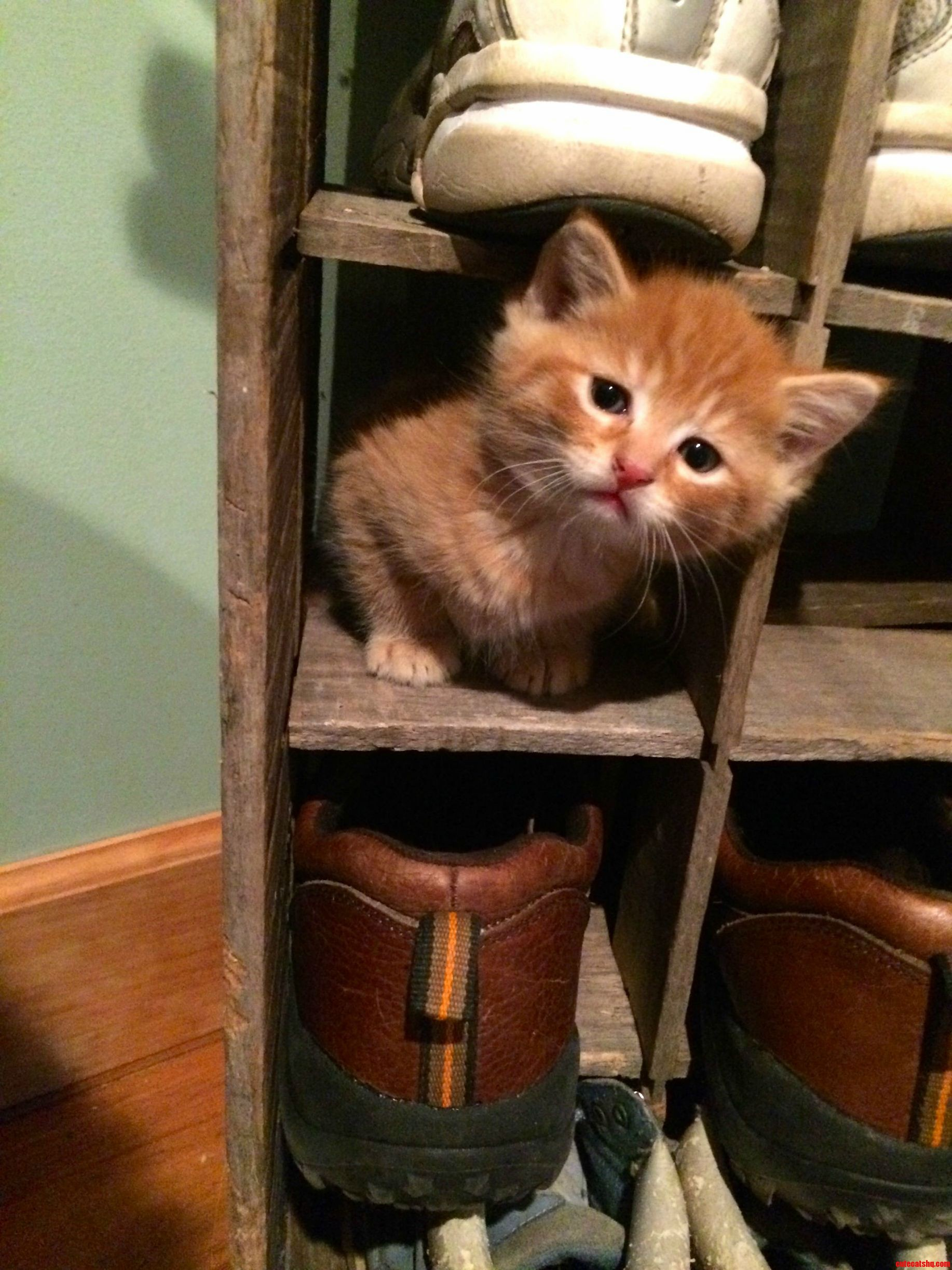 Exploring A New Cubby Hole