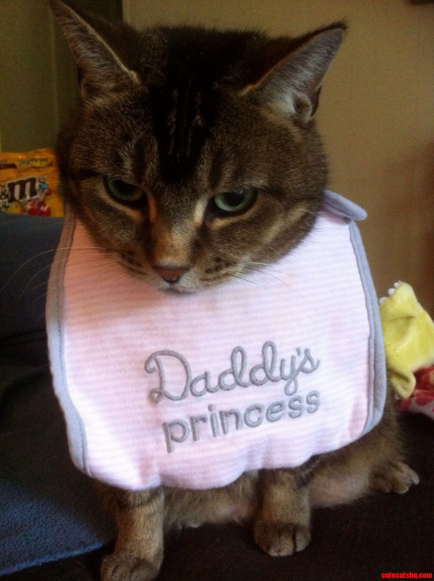 Extremely Cheesy Pic Of One Of My Cats Fatso. The Bib Is My Human Daughters.