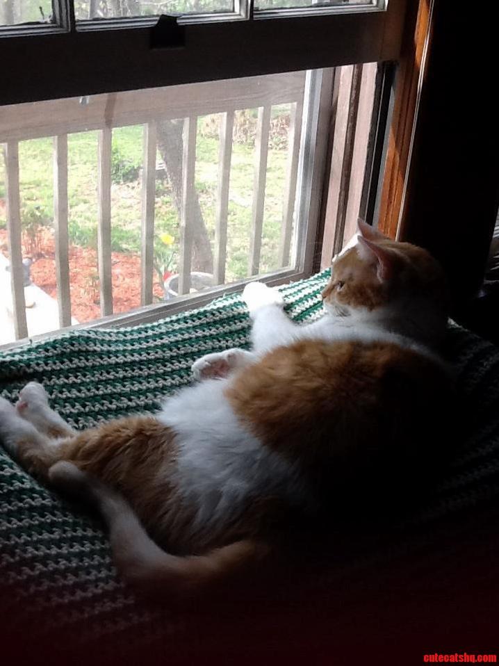 Fat Max Enjoying The Fresh Air.