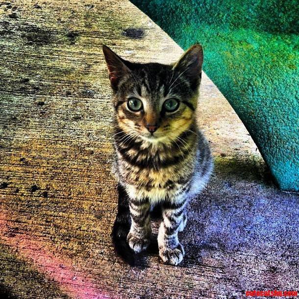 Feral Kitten I Met In The Tropics