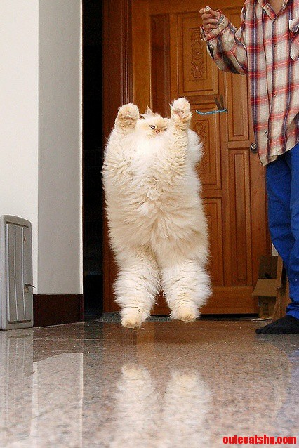 Fluffy Floating Cat