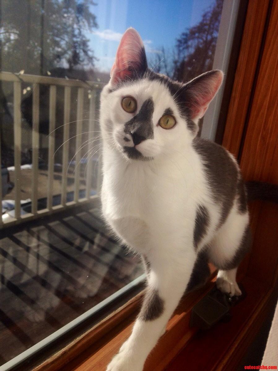 Four Months Ago I Found A Scraggly Little Kitten
