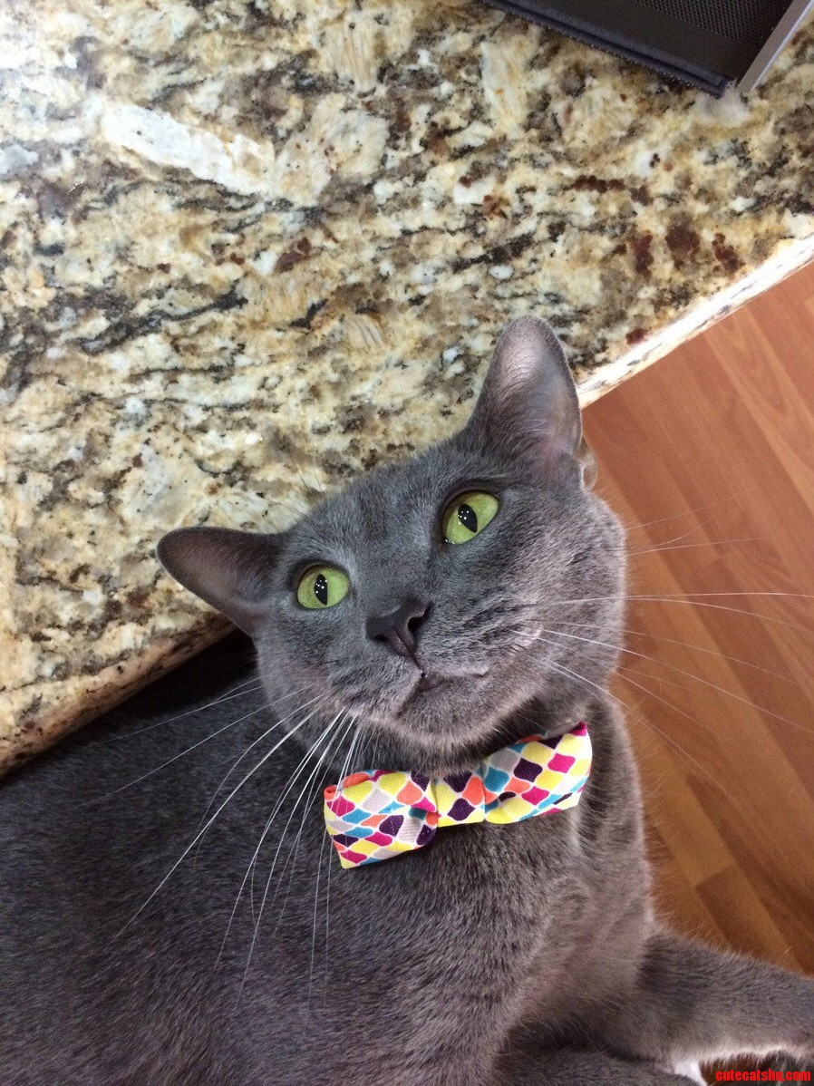 Got My Son A Bow Tie