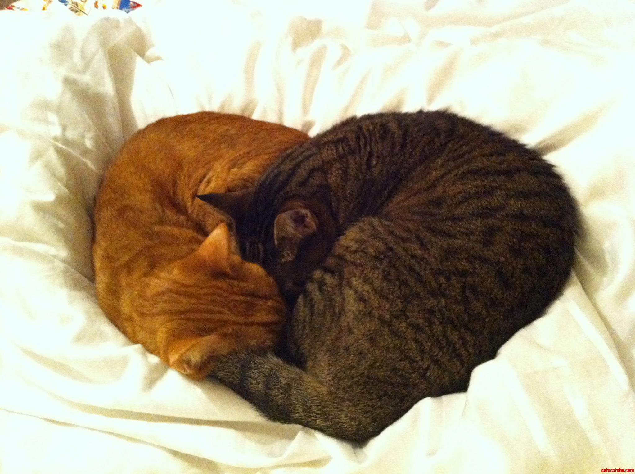 Happy Valentines Day Everyone Cute Cats Hq Pictures Of Cute Cats