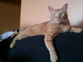 Have You Seen This Cat Because He Is Awesome -