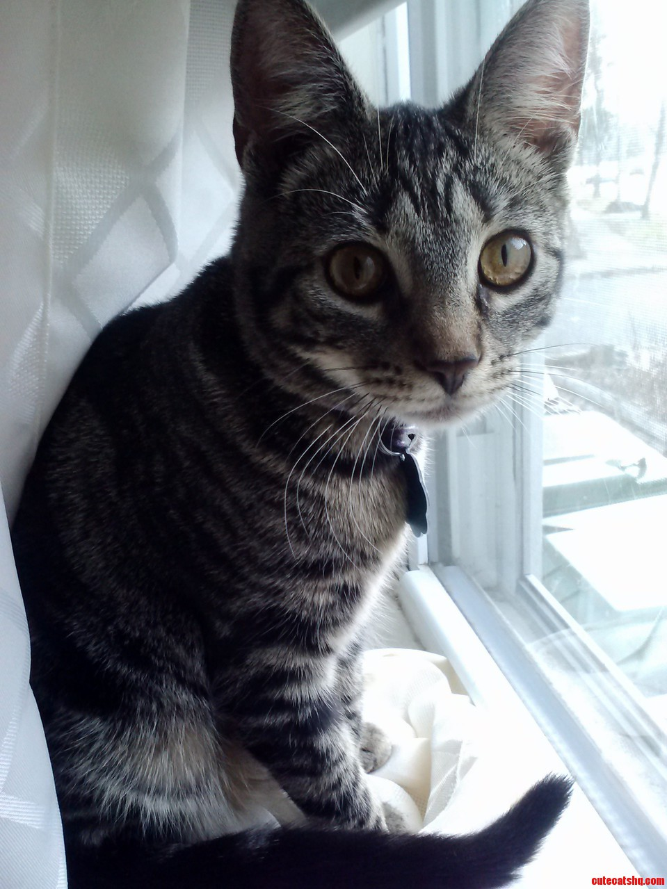 How Much Is That Kitty In The Window