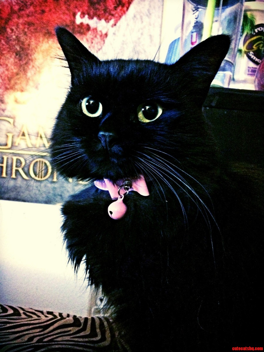 I Hear We Are Giving Out Love For Black Cats Heres My Stunner Kirby