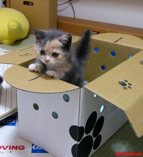 I Like My Box