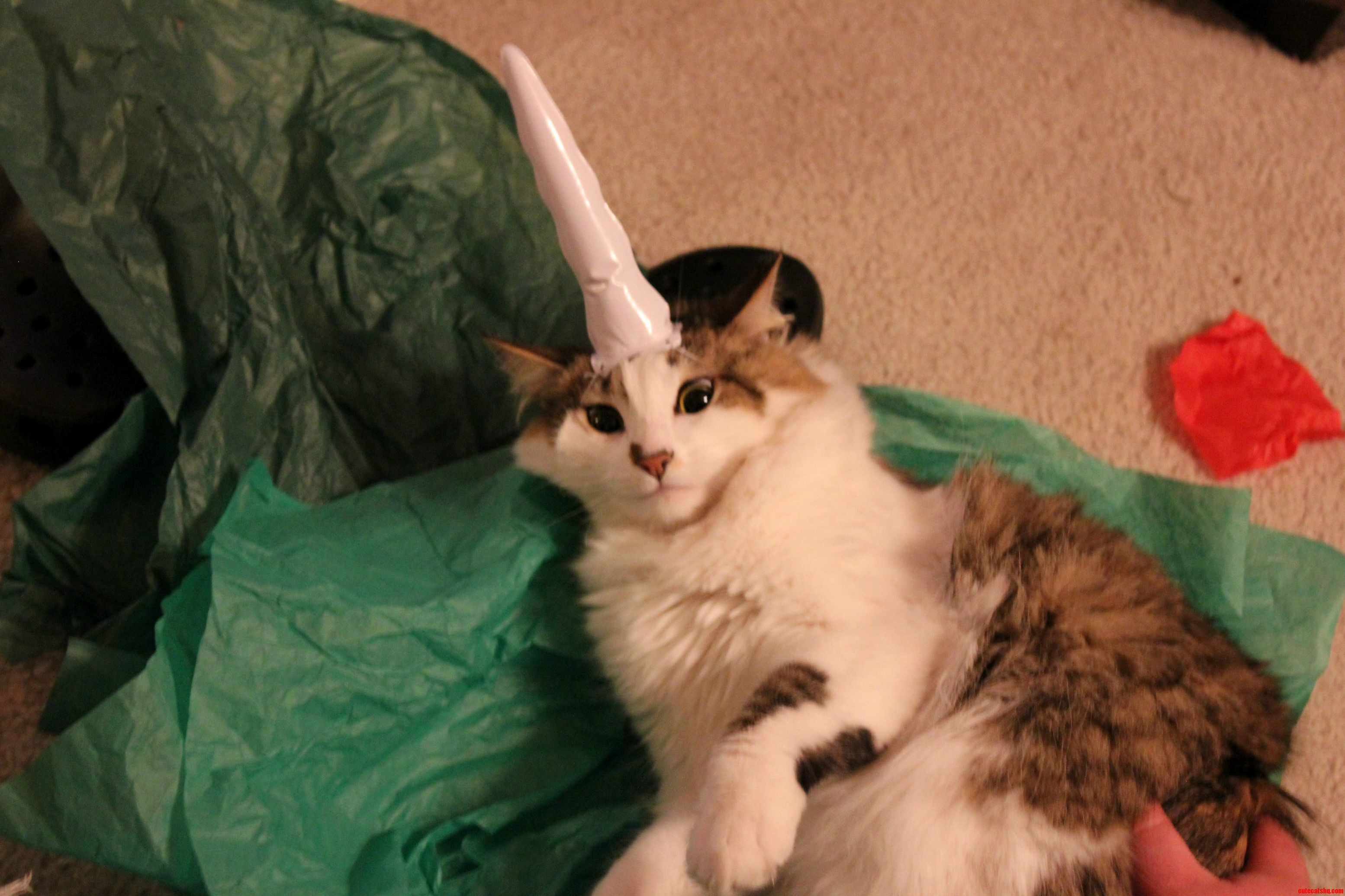 I Submit To You My Super Soft Fat Toni Sporting Her Unihorn P.S. She Loves It