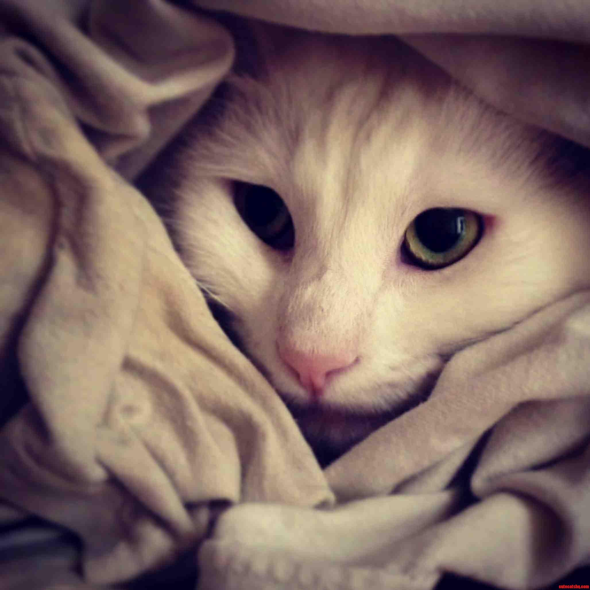 Itap-Americas Next Top Cat Model