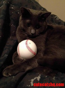 Just A Cat With A Baseball
