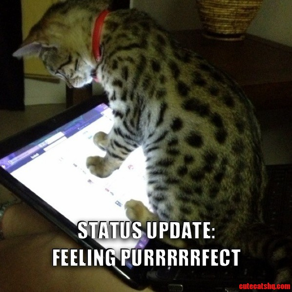 Just Checking Facebook Cute Cats Hq Pictures Of Cute Cats And Kittens Free Pictures Of Funny Cats And Photo Of Cute Kittens