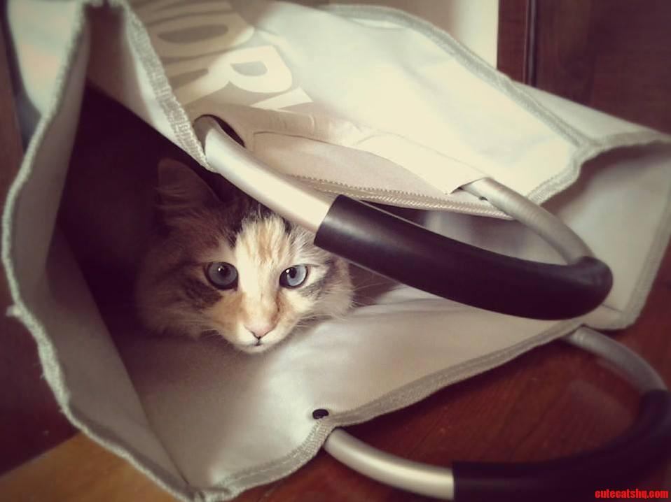 Kiki Loves Bags