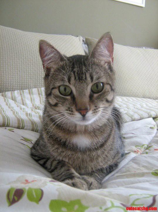 Look At My Cat. Cuteness Awaits D