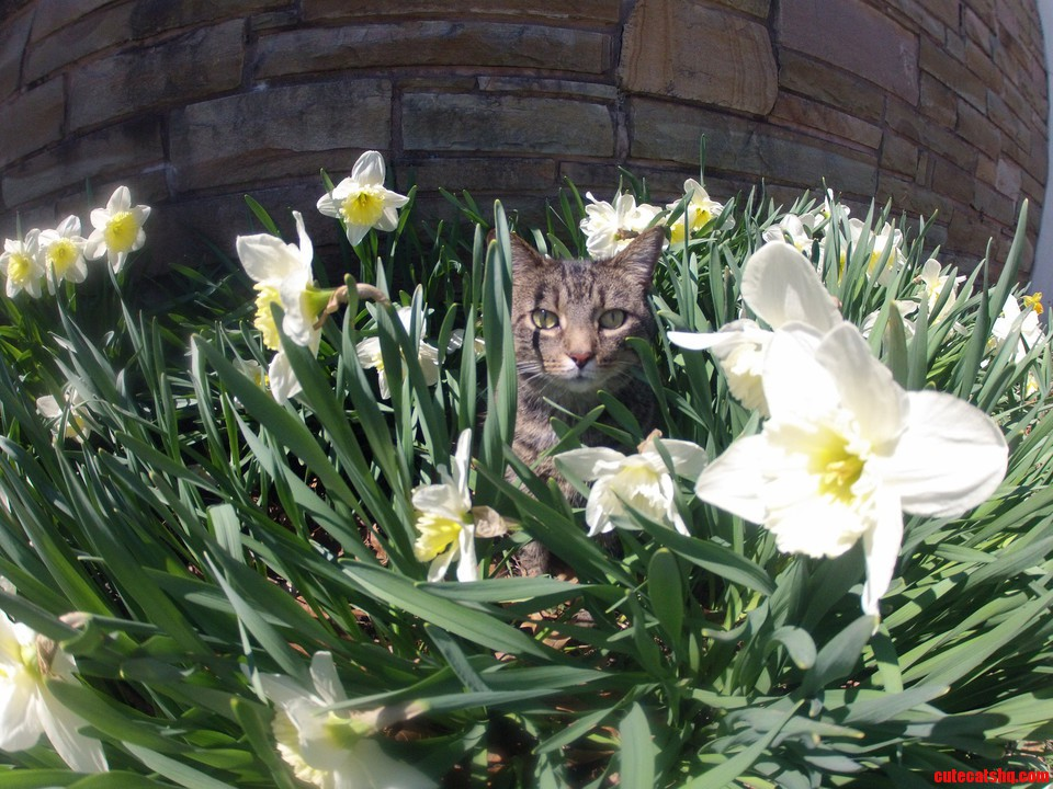 Lucy In The Daffodils