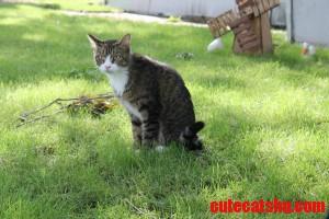 Macho Meow Kitty Savage Outside