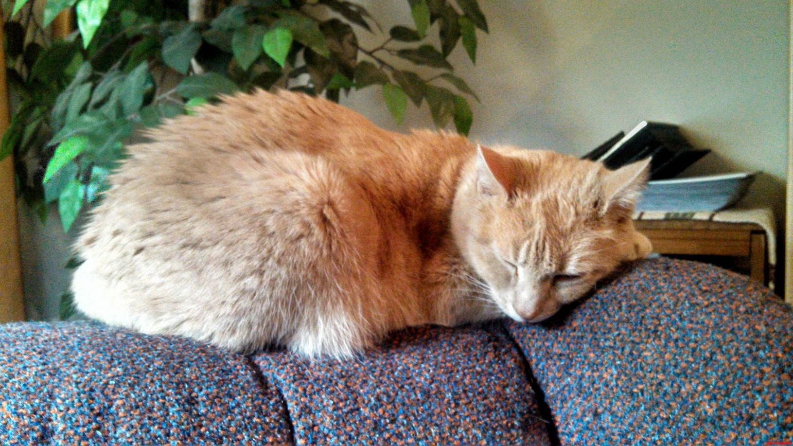 Meet Butterscotch. Hes Adorable When He Sleeps.