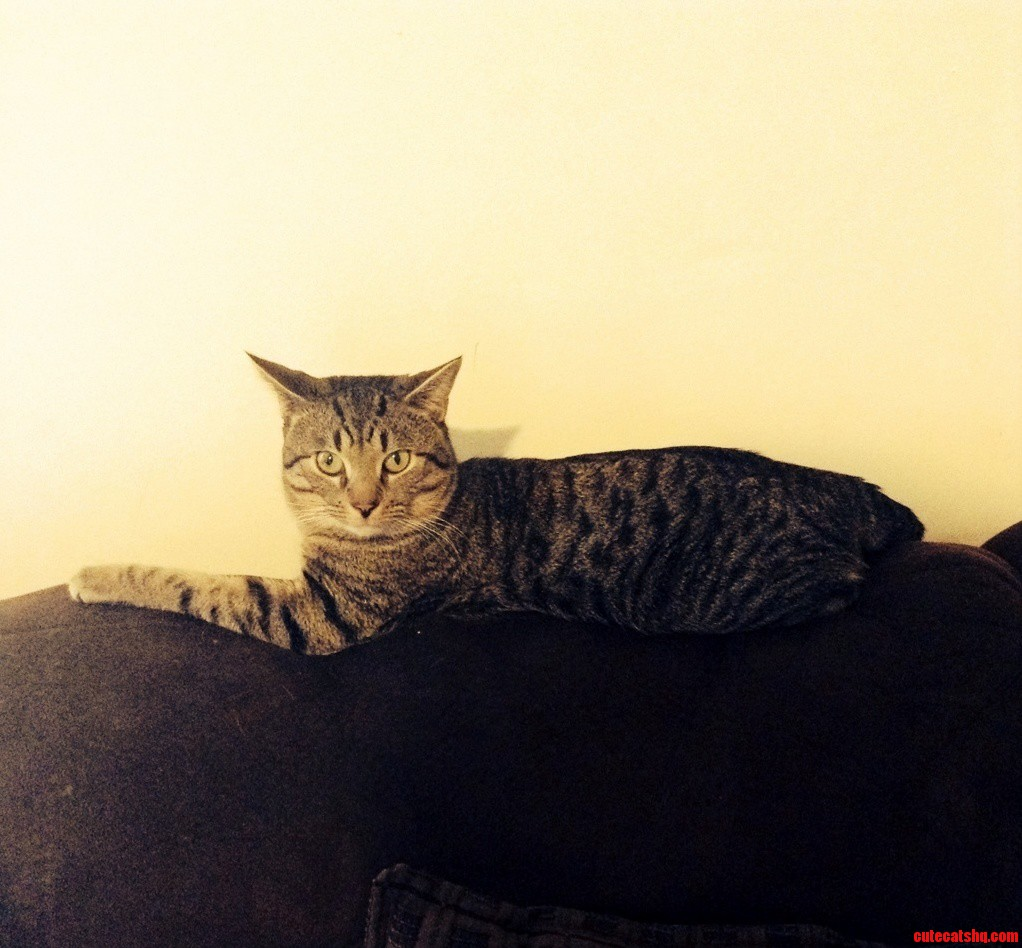 Meet My Cat Simba.