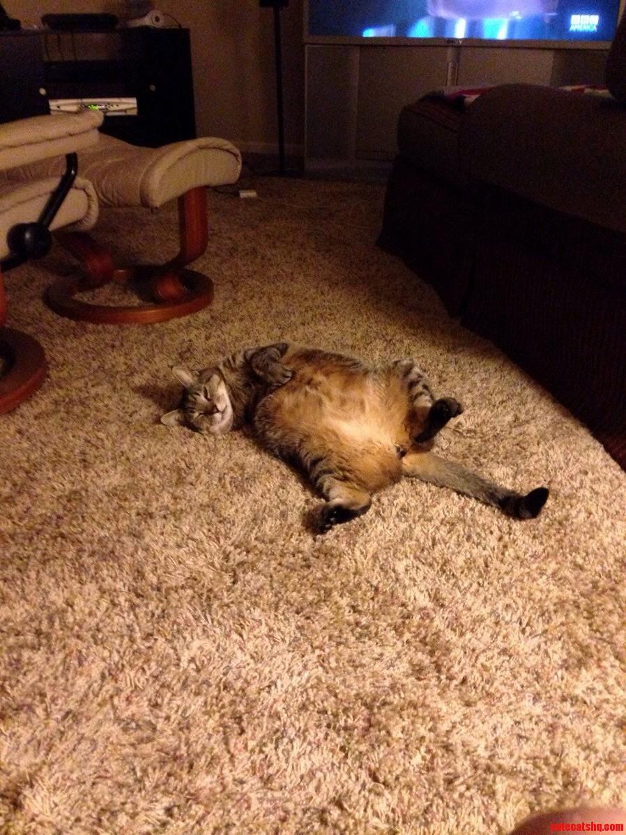 Meet My Three Legged Cat Hank.