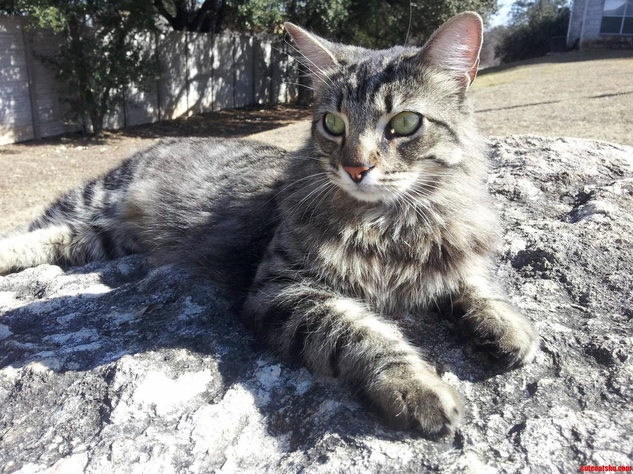 Mittens King Of The Neighborhood