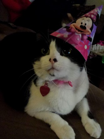 Moo Moo Is Ready For Her Daddys Birthday Tomorrow