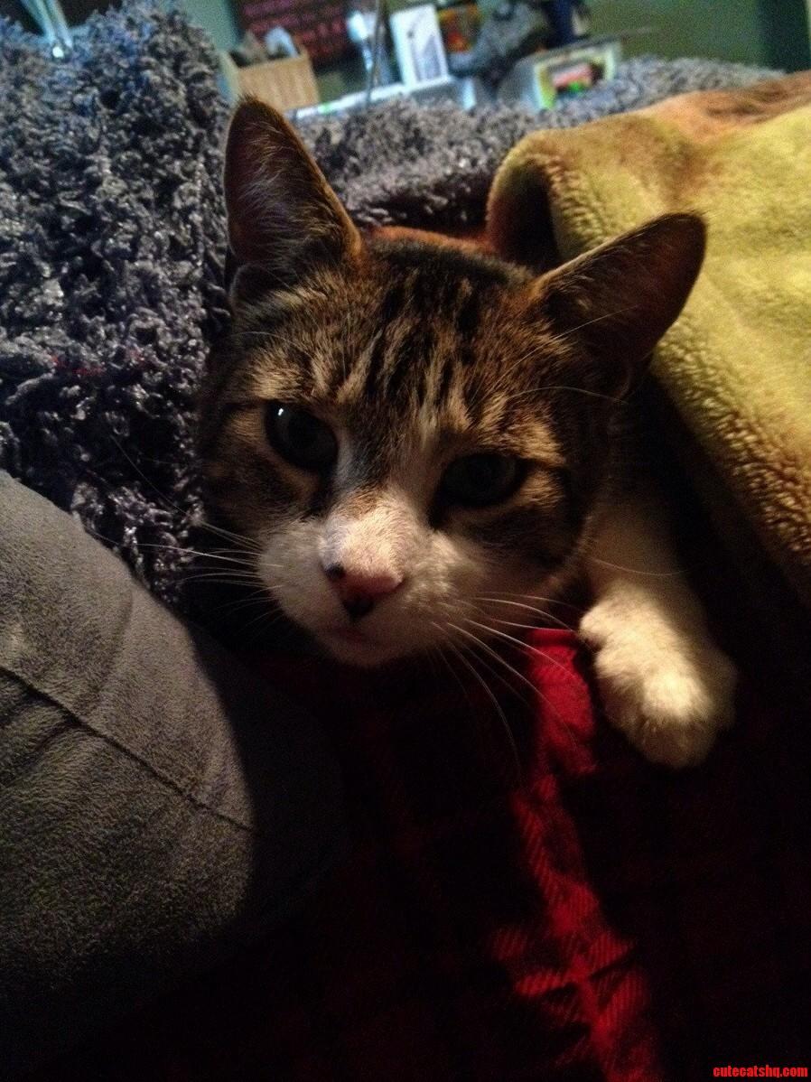 More Of My Model Cat.