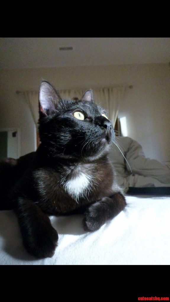 My Beautiful Kitty Blaze Taken This Morning In Her Favorite Spot On The Edge Of My Bed.