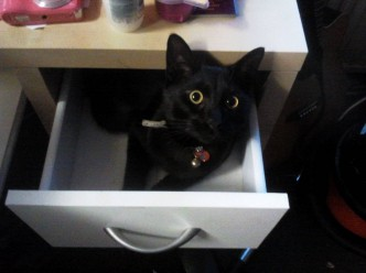 My Black Cat In A Drawer