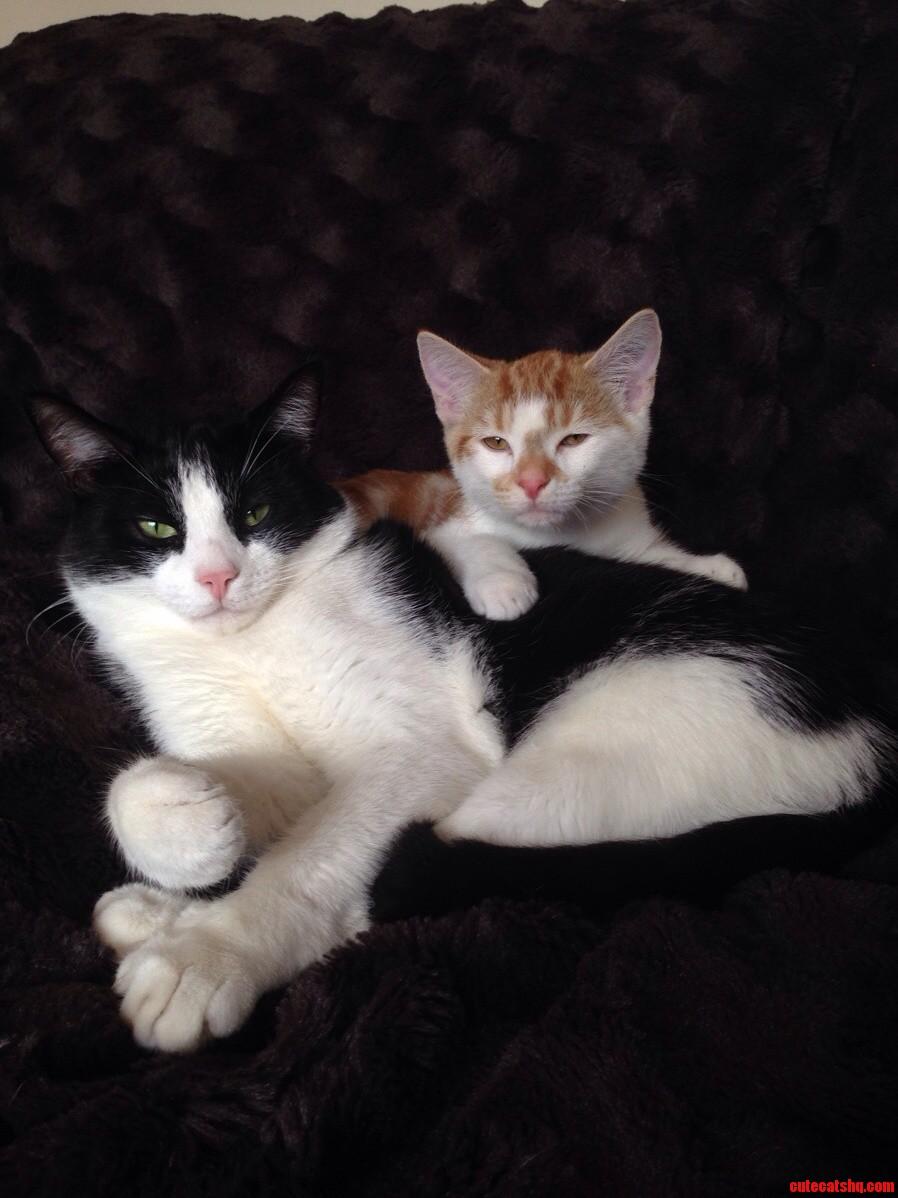 My Boys Having A Cuddle