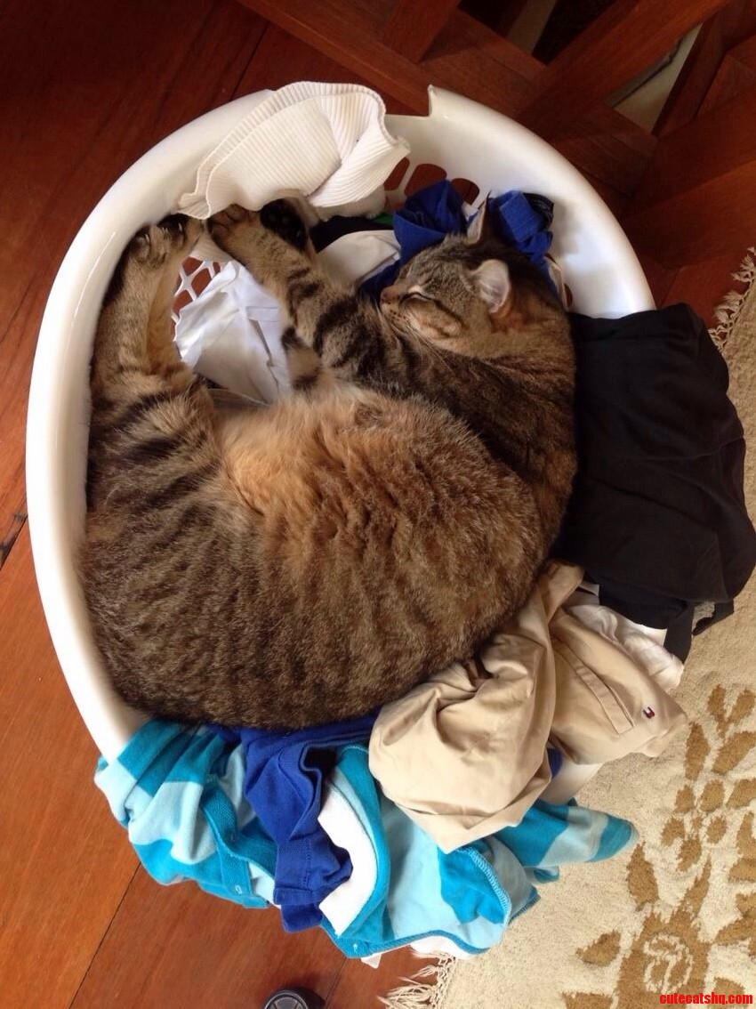 My Cat Doing The Ironing
