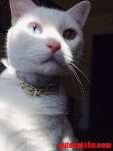 My Cat Ghost Face And Her Crazy Eyes.