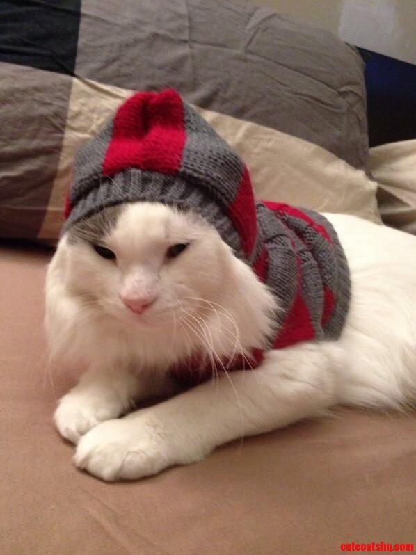 My Cat Hates His Hoodie