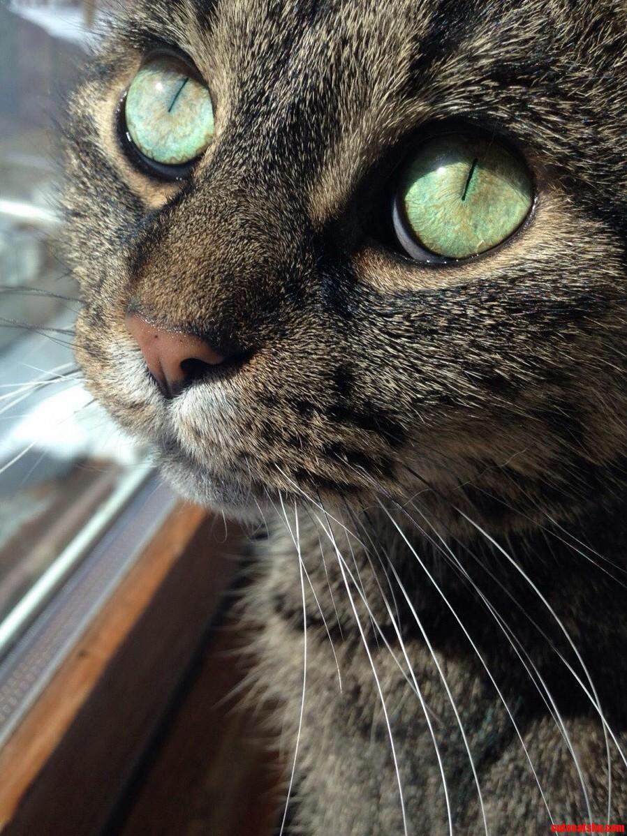 My Cat Jazzy